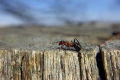 在树的蚂蚁由边 免版税库存照片