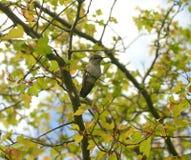 在树的蜂鸟 免版税库存图片