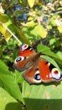 在树的蝴蝶,特写镜头 图库摄影