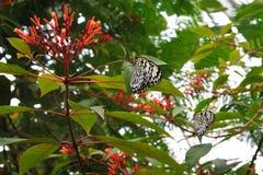 在树的蝴蝶 免版税库存照片