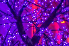 在树的被带领的轻的佐仓人造花在晚上 免版税库存照片