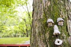 在树的装饰面孔 库存照片