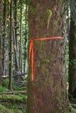 在树的足迹标志 免版税库存图片