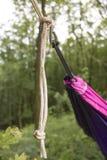 在树的软的吊床在森林里 库存照片