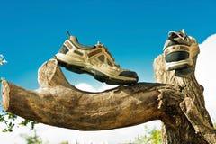 在树的运动鞋 图库摄影