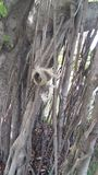 在树的逗人喜爱的灰鼠 库存照片