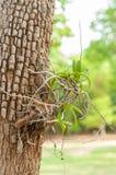 在树的野生兰花 库存图片