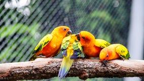 在树的金刚鹦鹉 库存图片