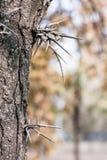 在树的钉 免版税库存照片