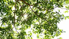 在树的阳光 影视素材