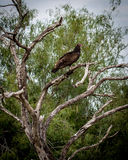在树的雕在口岸曼斯菲尔德,得克萨斯 免版税库存图片
