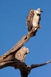 在树的雕 免版税库存照片