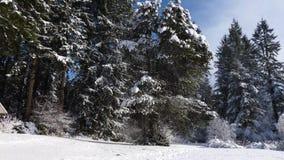 在树的雪在冬天风暴以后吹散作为天空轮蓝色和取暖器 股票视频