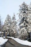 在树的雪在山 库存图片