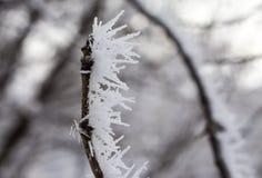 在树的霜 库存照片
