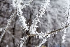 在树的霜 免版税库存照片