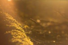 在树的青苔在阳光下 免版税库存图片