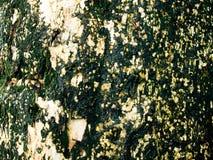 在树的青苔 库存照片