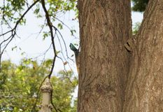 在树的非洲龙在非洲森林里 库存图片