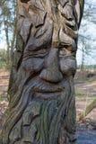 在树的面孔 库存照片