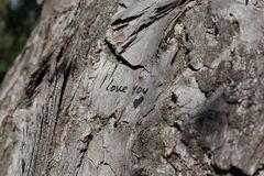 在树的题字 库存图片
