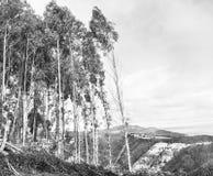 在树的风 免版税图库摄影