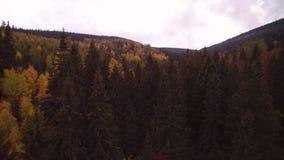 在树的飞行-从空气的森林 影视素材
