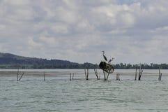 在树的鸟在湖 免版税库存照片