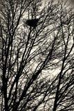 在树的鸟巢 免版税库存图片