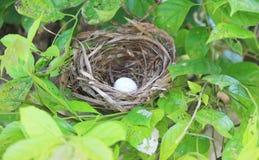 在树的鸟的巢 免版税库存照片
