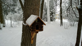 在树的鸟舍与北美山雀 免版税库存照片