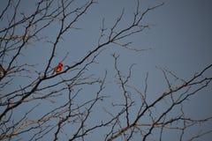 在树的鸟 免版税库存照片