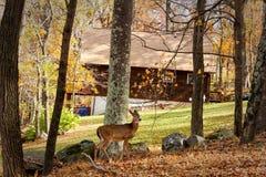 在树的鹿 免版税库存图片