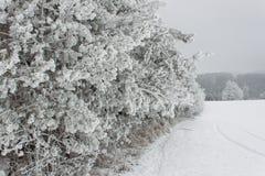在树的结冰的雾 冰在杉树分支  冷的早晨在乡下 农村风景在捷克 免版税图库摄影