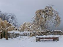 在树的冻水在Valaste瀑布爱沙尼亚 库存图片