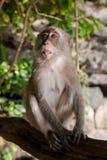 在树的猴子 图库摄影