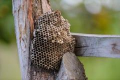在树的离开的黄蜂巢 库存照片