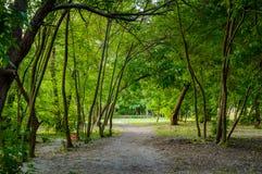 在树的阴影的森林路在日落前的 免版税库存照片