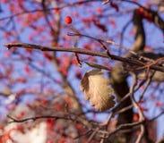 在树的11月叶子 库存照片