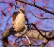 在树的11月叶子 免版税图库摄影