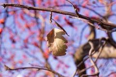 在树的11月叶子 免版税库存图片