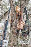 在树的死的狐狸,当寻找时 库存图片