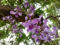 在树的紫色兰花 免版税库存图片