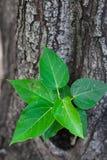 在树的绿色叶子 免版税图库摄影