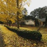 在树的黄色叶子 库存图片