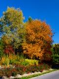 在树的黄色和红色叶子在秋天 库存图片