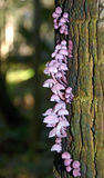 在树的紫色真菌 库存照片