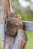 在树的黄蜂巢 免版税图库摄影