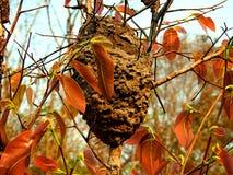 在树的黄蜂巢 库存照片