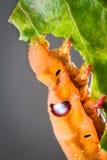 在树的蝴蝶幼虫 免版税图库摄影
